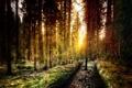 Картинка лес, деревья, обработка, Калифорния, США, Йосемити, лучи солнца