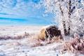 Картинка Поле, Деревья, Снег, Пейзаж, Иней