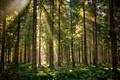 Картинка природа, лес, свет, лучи
