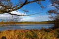 Картинка осень, небо, трава, облака, деревья, ветки, река