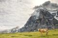 Картинка природа, гора, корова
