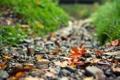 Картинка дорога, осень, листья, камни