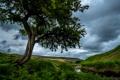 Картинка трава, тучи, ручей, камни, дерево, поля, Англия