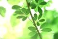 Картинка nature, лето, зелень, листья, деревья, природа, ветка