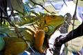 Картинка листья, природа, дерево, ветка, ящерица