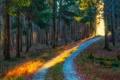 Картинка дорога, осень, лес, свет, деревья