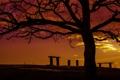 Картинка небо, облака, дерево, силуэт, зарево, скамья