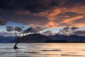 Картинка New Zealand, Lake Wanaka, Birds on a Tree