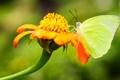 Картинка цветок, лето, бабочка, фокус, насекомое