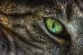 Картинка кошка, макро, глаз, зелёный, кошачий