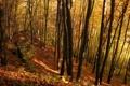 Картинка лес, осень, деревья