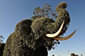Картинка Слон, фигуры, животное