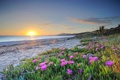 Картинка песок, море, небо, закат, цветы, берег