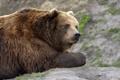 Картинка взгляд, медведь, мишка, профиль