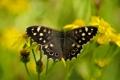 Картинка природа, бабочка, лето