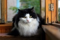 Картинка кошка, взгляд, окно