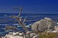 Картинка море, небо, пейзаж, дерево