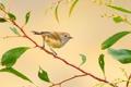 Картинка ветка, перья, птичка