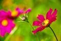 Картинка цветок, пчела, растение, лепестки, насекомое