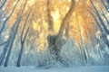 Картинка зима, лес, снег, деревья, иней