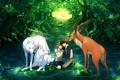 Картинка лес, вода, девушка, пруд, олень, арт, волки