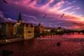 Картинка чайки, Прага, Чехия