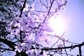 Картинка ветки, дерево, весна, цветочки