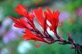Картинка природа, цветок, экзотика, лепестки, растение