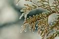 Картинка зима, снег, ветка, hombre, winter2k10