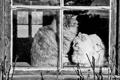 Картинка кошки, окно, стекло, рама