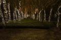 Картинка деревья, ночь, праздник, атмосфера, красиво, photographer, украшенные