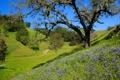 Картинка трава, деревья, холмы, склон, небо, цветы