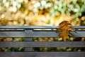 Картинка осень, скамейка, природа, лист