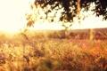 Картинка поле, трава, листья, солнце, свет, деревья, закат