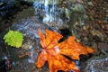 Картинка дно, камни, осень, листья, вода