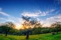 Картинка поле, лето, деревья, пейзаж