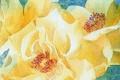 Картинка цветы, фон, картина