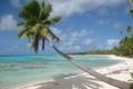 Картинка песок, море, пляж, тропики, пальма