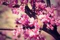 Картинка цветы, ветки, природа, дерево, ветка, лепестки, бутоны
