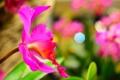 Картинка природа, цветок, растение, лепестки
