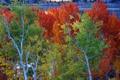 Картинка осень, листья, деревья, озеро, Калифорния, США, June Lake