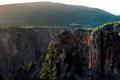 Картинка деревья, скалы, каньон, США, Colorado, Gunnison National Park, Black Canyon