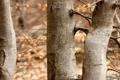 Картинка осень, макро, деревья, природа, фото, дерево, стволы