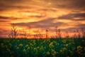 Картинка облака, свет, пейзаж, закат, природа, ростки, растения