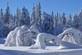 Картинка зима, лес, природа, сугробы