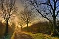 Картинка дорога, осень, свет, пейзаж, туман, утро