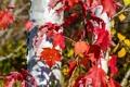 Картинка осень, листья, дерево, ствол, багрянец