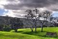 Картинка небо, трава, облака, деревья, пейзаж, горы, природа