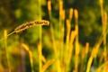 Картинка трава, макро, природа, обои, колос, растения, размытость