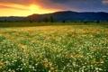 Картинка закат, пейзаж, небо, весна, поле, облаках, деревья
